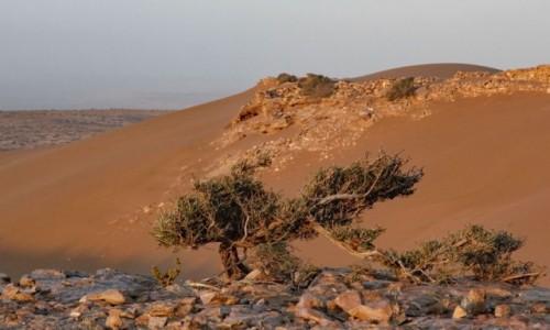 SAHARA ZACHODNIA / Laâyoune-Sakia El Hamra / w piaskach pustyni / Na saharyjskim klifie
