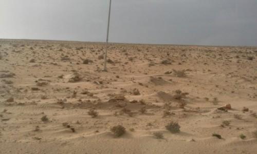 Zdjęcie SAHARA ZACHODNIA / Ad-Dachla-Wadi az-Zahab / na drodze Agadir - Dakhla / Sahara
