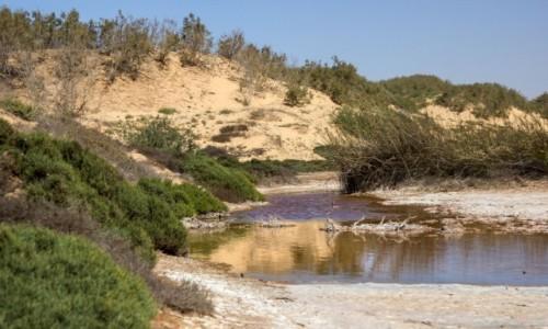 SAHARA ZACHODNIA / Dakhla-Oued Ed-Dahab / Sebkhet Imlily / Woda na pustyni