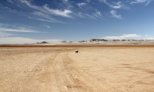 Zdjecie SAHARA ZACHODNIA / Ad-Dachla-Wadi az-Zahab / na dnie zatoki / Pastelowe widoki