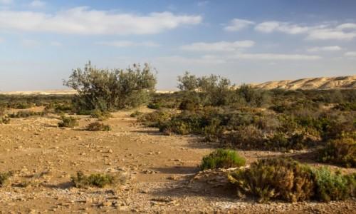 Zdjecie SAHARA ZACHODNIA / Al-Ujun-As-Sakija al-Hamra / Haoui en Naam / Jak to na hamadzie,tu wydemka,tam ouedzik