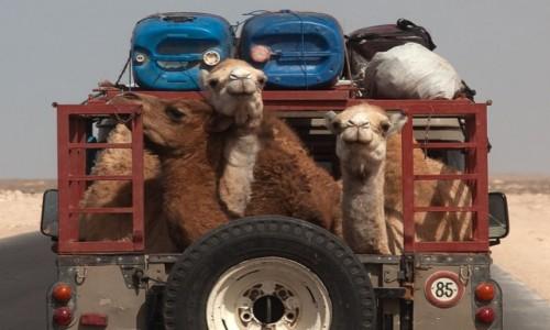 Zdjecie SAHARA ZACHODNIA / Al-Ujun-As-Sakija al-Hamra / gdzieś po drodze / Podróż przez pustynię