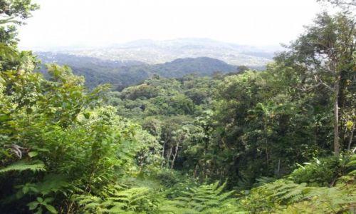 Zdjęcie SAINT LUCIA / Castries  / Las Deszczowy / Las deszczowy