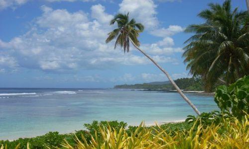 Zdjęcie SAMOA ZACHODNIE / Wyspa Upolu / Wybrzeże południowe / Palma i ocean