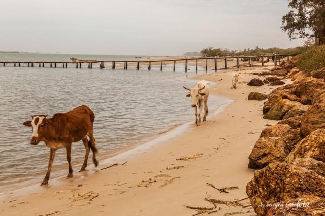 Zdjęcia: Senegal, Senegal, African Road Trip - lokalni mieszkańcy na plaży w Senegalu , SENEGAL