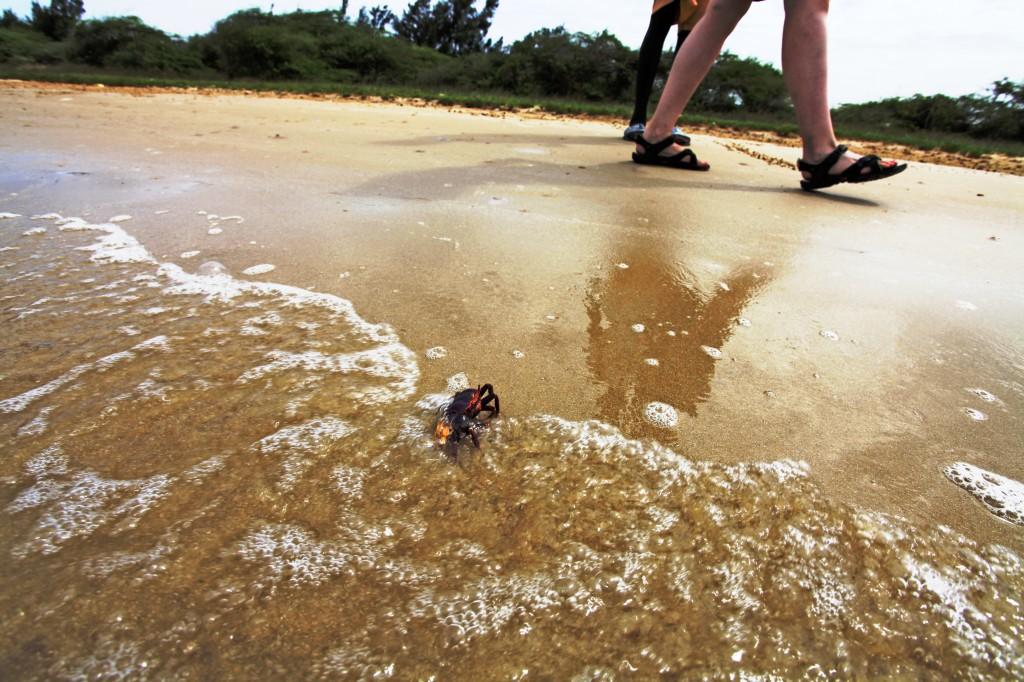 Zdjęcia: Nationa Park, Saint Louis, African Beach, SENEGAL