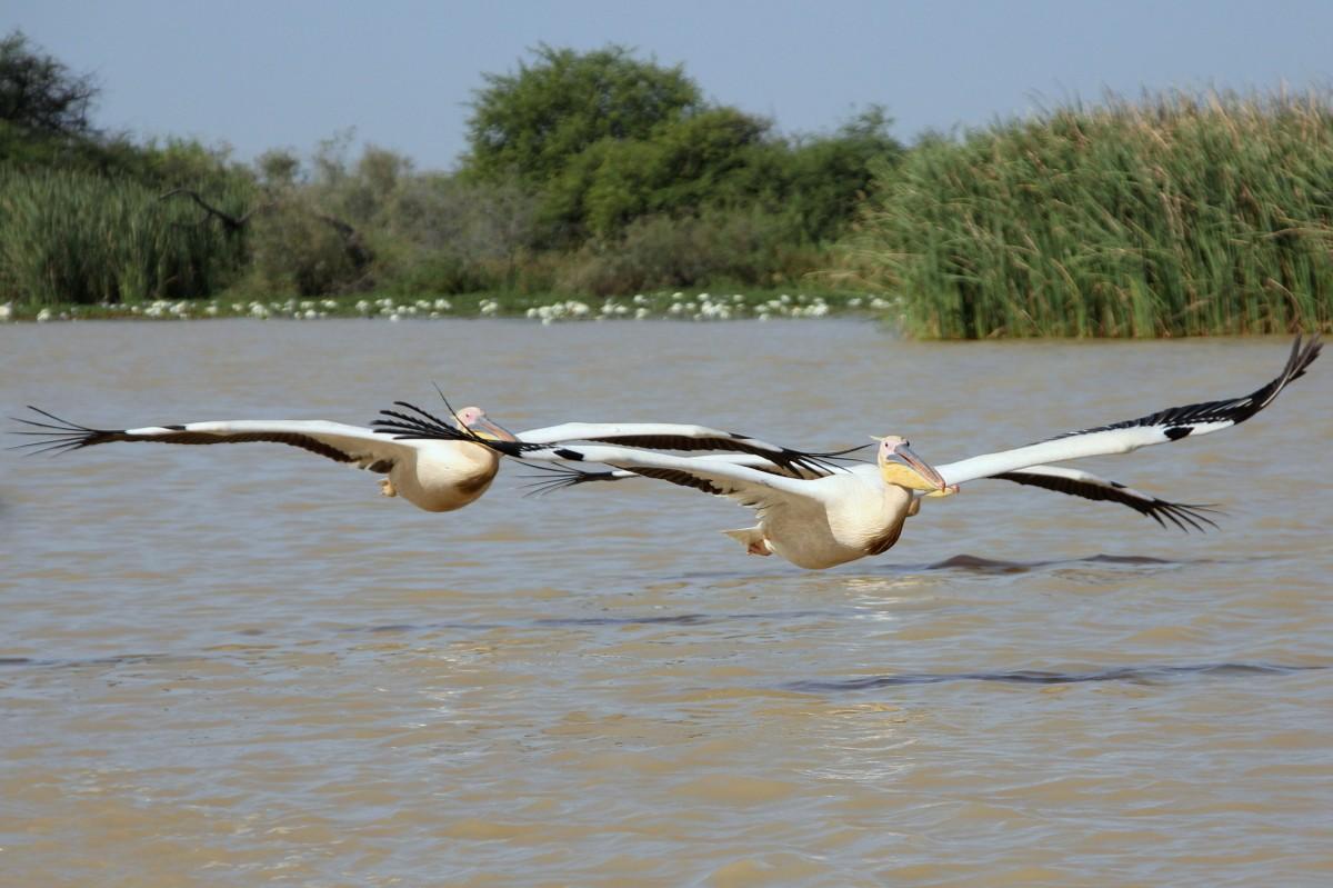 Zdjęcia: PN Djoudj, Północny Senegal, Nalot, SENEGAL
