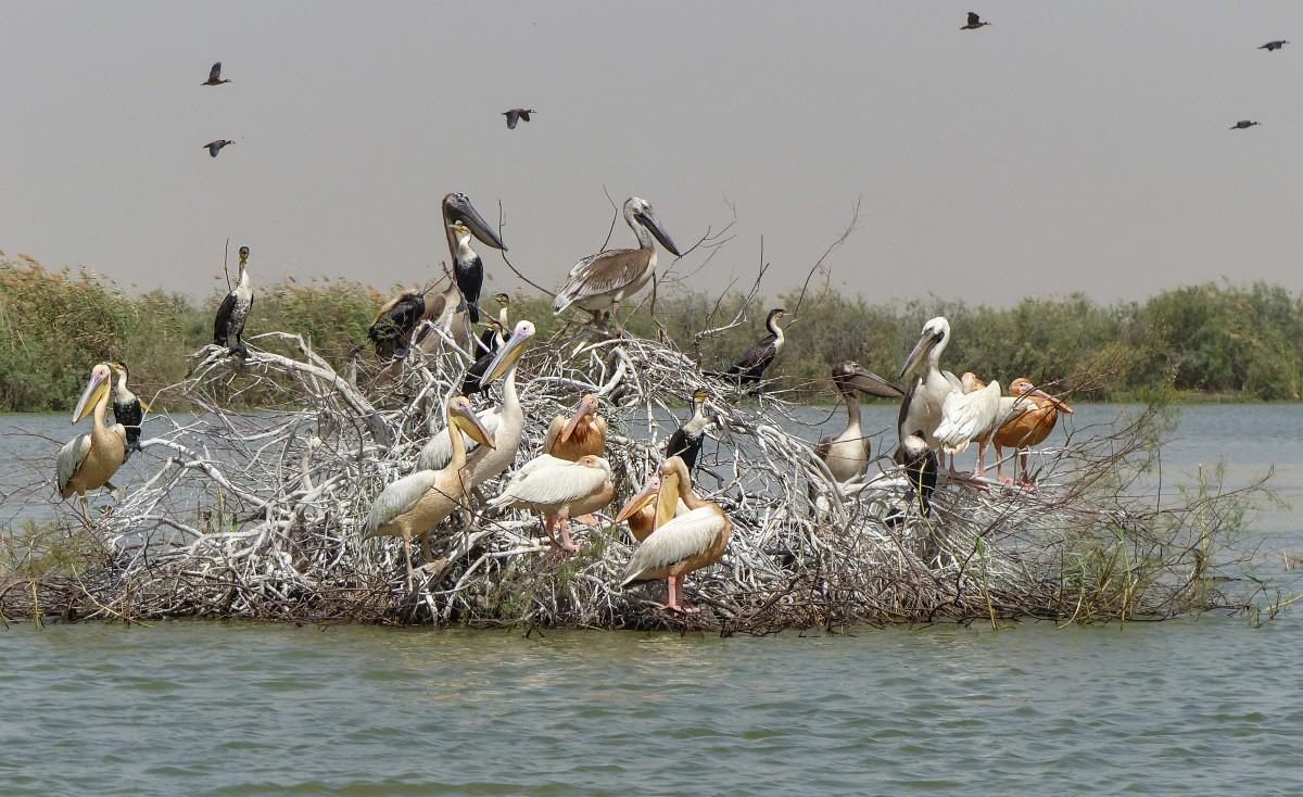 Zdjęcia:  Djoudj ,  Wyspa pelikanów, SENEGAL