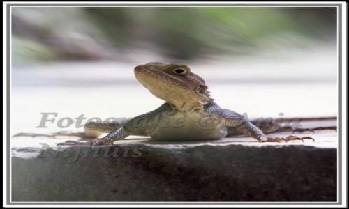 Zdjecie SENEGAL / Afryka / jedna z wysp  w Senegalu / salamander