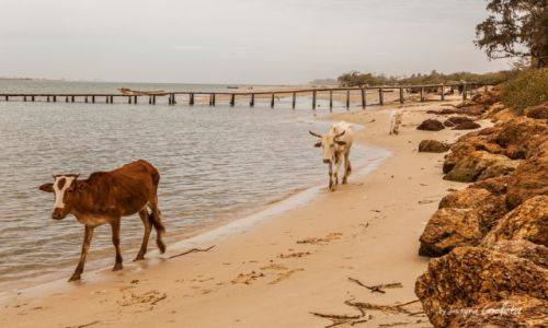 SENEGAL / Senegal / Senegal / African Road Trip - lokalni mieszkańcy na plaży w Senegalu