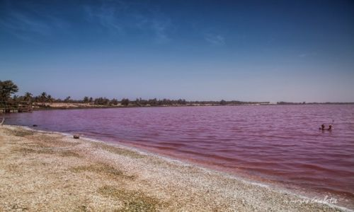 Zdjecie SENEGAL / Senegal / Senegal / African Road Trip - różowe jezioro w Senegalu