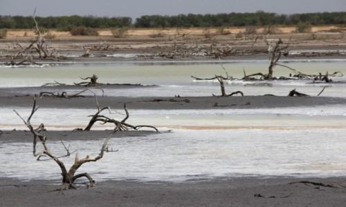 Zdjęcie SENEGAL / Północny Senegal / PN Djoudj / Kolory salin