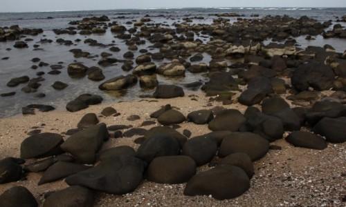 Zdjęcie SENEGAL / Dakar / Półwysep Zielonego Przylądka / Zielony Przylądek