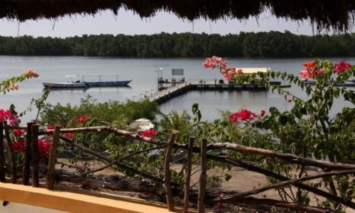 SENEGAL / Północny Senegal / Rzeka Saloum / Nad rzeką