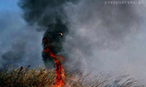 Zdjecie SENEGAL / Sahel / Sahel / Busz w ogniu