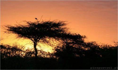Zdjęcie SENEGAL / Sahel / Sahel / Pora odpoczynku