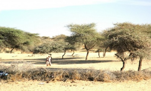 Zdjecie SENEGAL / Sahel / Sahel / W pobliżu domu