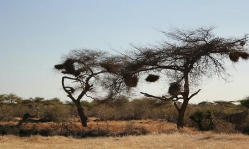 Zdjecie SENEGAL / Sahel / Sahel / Poplątańce