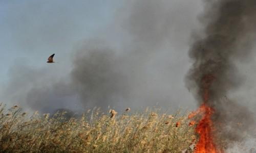 Zdjecie SENEGAL / Sahel / Sahel / Senegal w ogniu