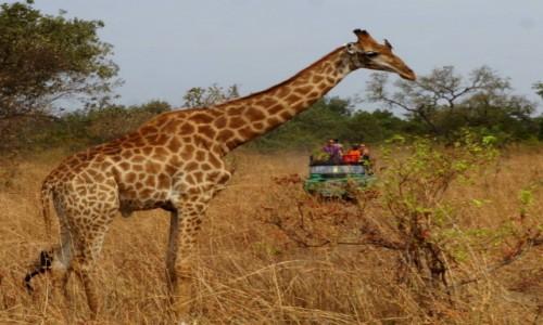 Zdjecie SENEGAL / Senegal / Wildelife Reserve / Nie mam spokoju