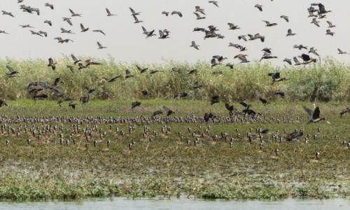 Zdjecie SENEGAL / - / Park Narodowy Oiseaux du Djoudj / Park Narodowy Oiseaux du Djoudj