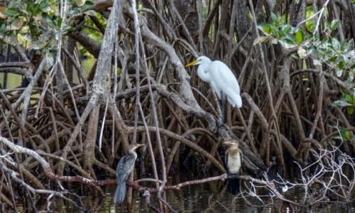 Zdjecie SENEGAL / - / Senegal /  w delcie rzeki Saloum