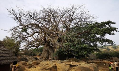 SENEGAL / Bassari / wioska ludu batik / Baobab Bedików