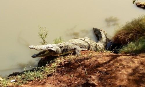 Zdjęcie SENEGAL / park Bandia / bajoro / seeer