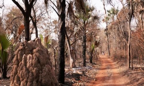 Zdjecie SENEGAL / Południowo-wschodnia część Senegalu / Nikolo Koba / Park Nikolo Koba - wpisany na listę UNESCO