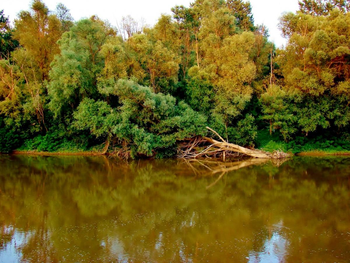 Zdjęcia: Jagodina, pomoravski, Koncarevo-rzeka Wielka Morawa, SERBIA