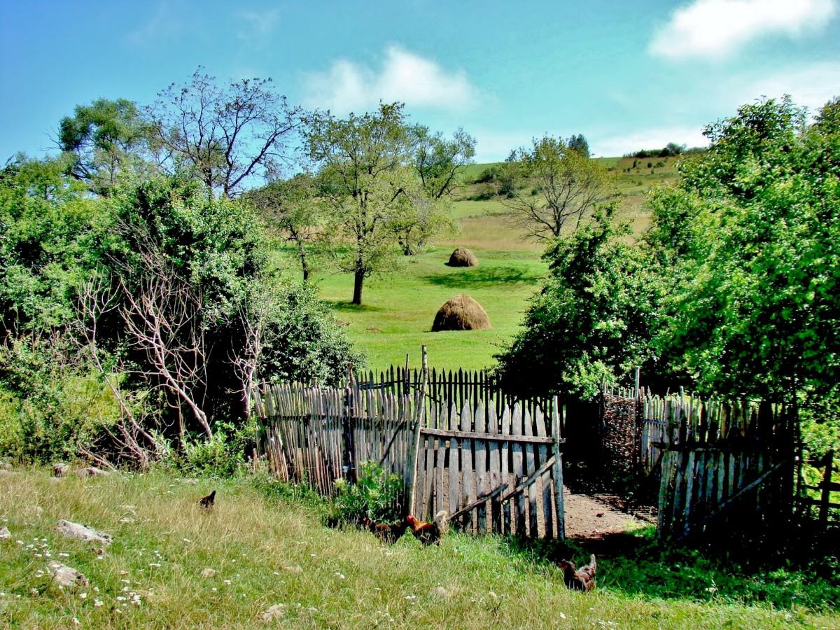 Zdjęcia: Sjenica, płd.-zach.Serbia, W pobliżu kanionu rzeki Uvac, SERBIA