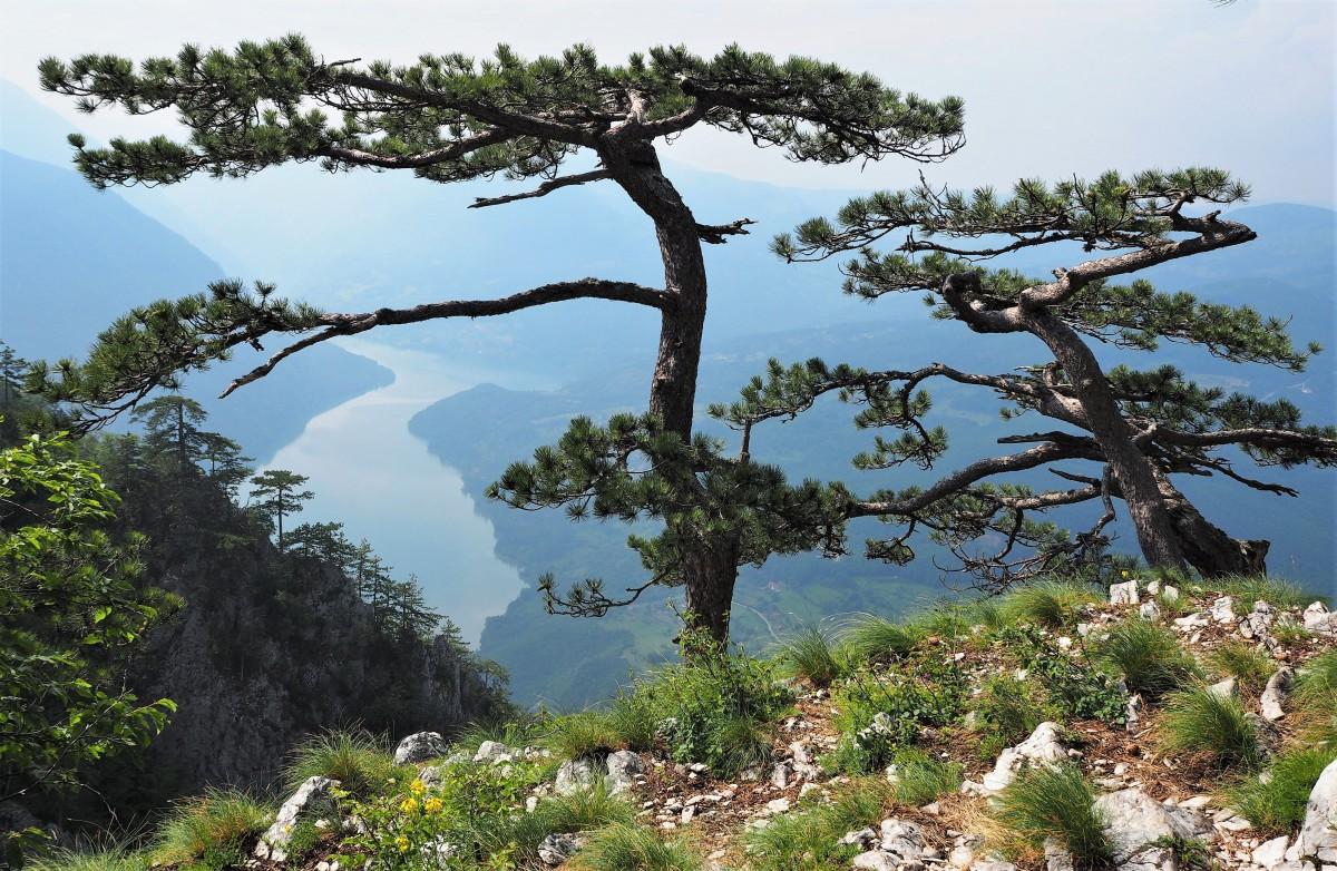 Zdjęcia: Bajina Basta, Narodni Park u Srbji, Banjska Stena..., SERBIA