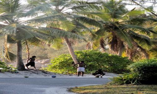SESZELE / Mahe / Takamaka / Seszele - zbieranie kasztanów... o pardon - kokosów