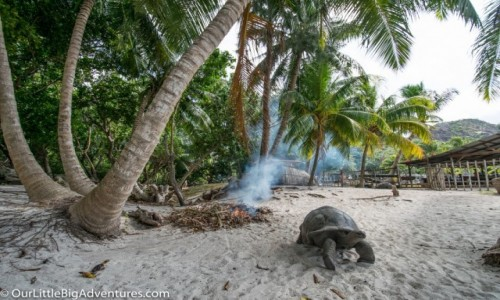 SESZELE / Afryka / Wyspa Curieuse / ��wie olbrzymie
