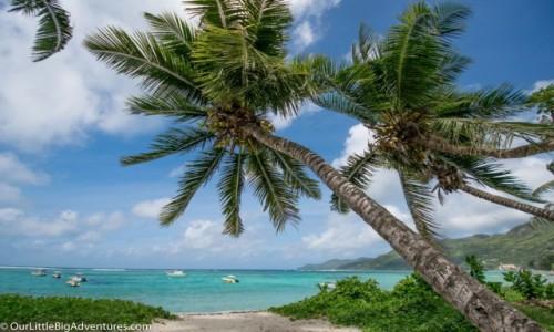 Zdjęcie SESZELE / Mahe / Anse Royale / Tropical Vibes