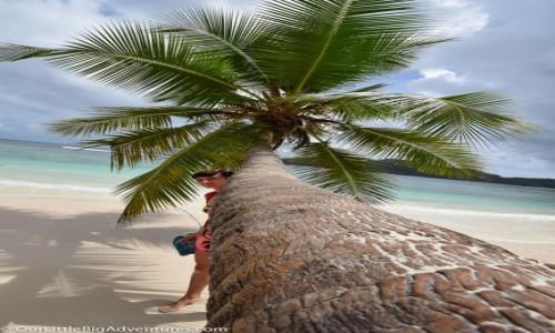 Zdjęcie SESZELE / Mahe / plaża / palma