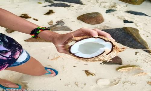 Zdjęcie SESZELE / Mahe / dzika plaża / koko