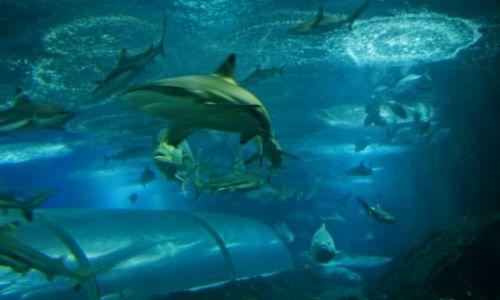 SINGAPUR / Sentosa Island / Underwater World / rekiny