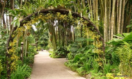 SINGAPUR / - / ogród botaniczny / Singapur 15