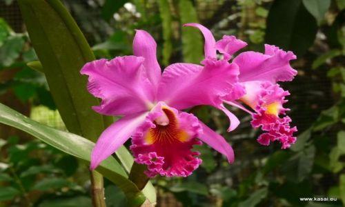 SINGAPUR / - / Ogród Botaniczny / Singapur 20