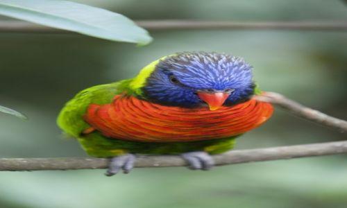 Zdjecie SINGAPUR / Jurong / Jurong Bird Park / :)