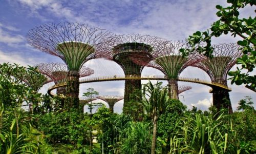 Zdjecie SINGAPUR / - / Singapur / Gardens By The Bay