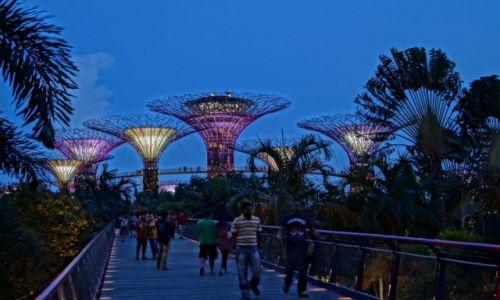 Zdjecie SINGAPUR / Singapur / ogród botaniczny / konkurs