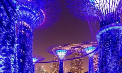 Zdjęcie SINGAPUR / - / Marina Bay / Gardens by the Bay