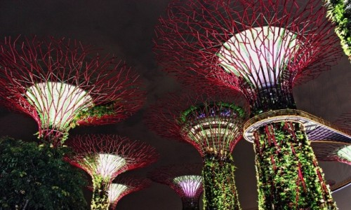 Zdjecie SINGAPUR / Singapur / Gardens By The Bay / Gardens By The Bay
