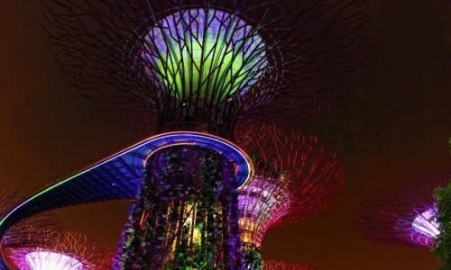Zdjęcie SINGAPUR / Singapur / Gardens By The Bay / Gardens By The Bay