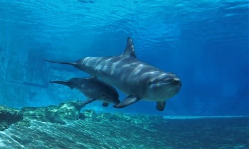 Zdjecie SINGAPUR / - / akwarium / życie basenowe