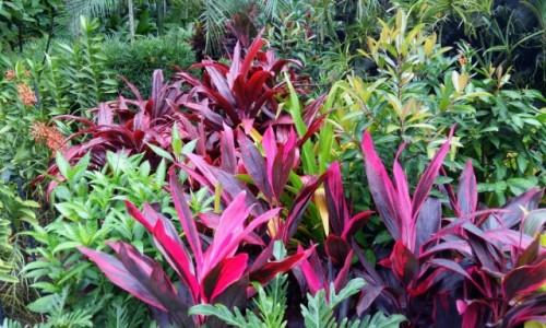 Zdjecie SINGAPUR / Singapur / Ogród Botaniczny / Kolory traw