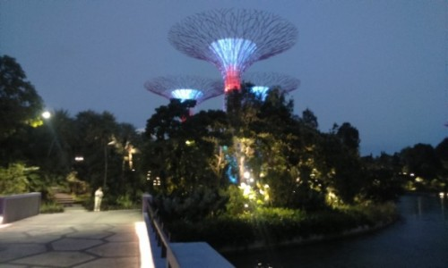 Zdjecie SINGAPUR / Azja / singapur / Gardens by the Bay