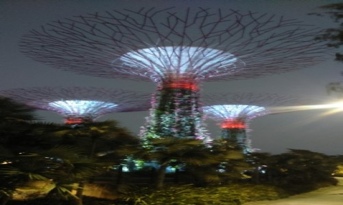 Zdjecie SINGAPUR / Azja / singapur / Gardens by the Bay 2